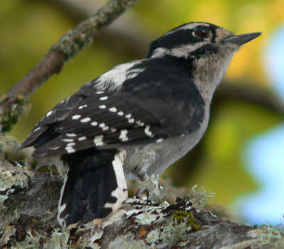 Mn Wi Bird Swallow Pigeon Woodpecker Removal And Control Experts Pigeon Swallow And Woodpecker Removal Control Experts Bird Removal Removing And Controlling Birds,Saltwater Fish Tank Ideas